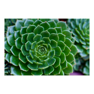 Green Succulent Nature Photography Poster at Zazzle