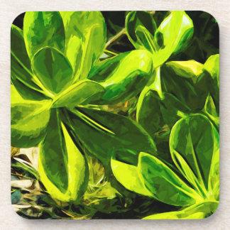 Green Succulent Ocean Beach Plant Abstract Coaster