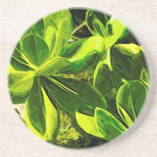 Green Succulent Ocean Beach Plant Abstract Drink Coaster