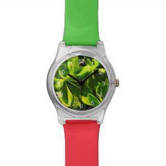 Green Succulent Ocean Beach Plant Abstract Wristwatches