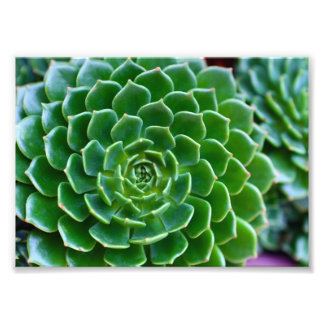 Green Succulent Photo Print