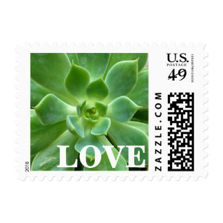 Green Succulent Plant LOVE Postage Stamps