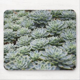 Green Succulent Plant Photo Print Mouse Pad
