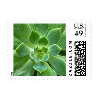 Green Succulent Plant Postage Stamps