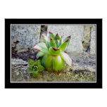 green succulent plant poster