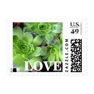 Green Succulent Plants LOVE Postage Stamps