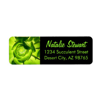 Green Succulent Square by Amy Vangsgard Label