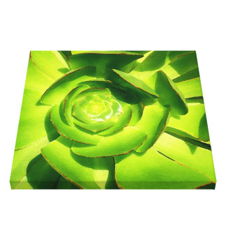 Green Succulent Square Stretched Canvas Print