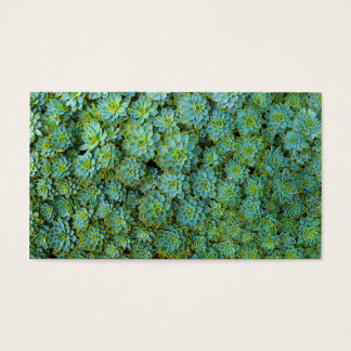Green Succulents Echeveria Plants Business Card