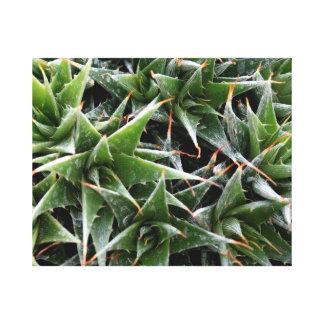 Green succulents flowers decorative photography canvas print