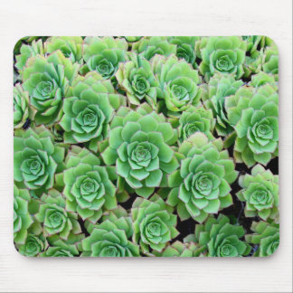 Green Succulents Mousepad