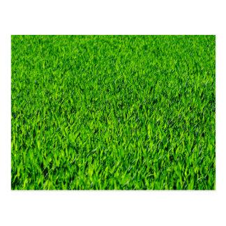 Green Summer Grass Texture Postcard