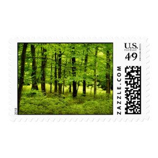 Green Summer Woods Postage