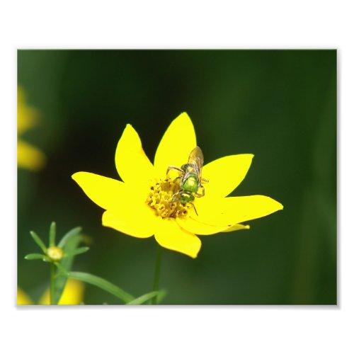 Green Sweat Bee, Photo Print.