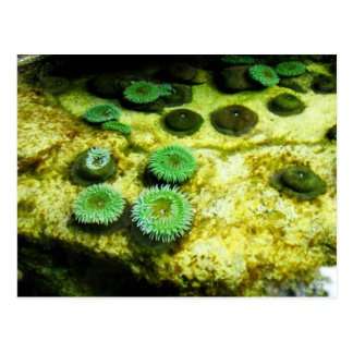 Green Tentacled Post Card