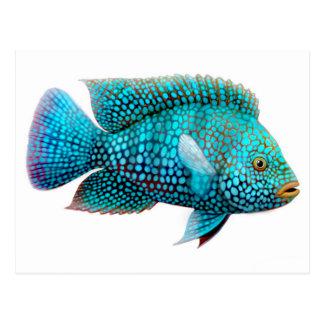Green Texas Cichlid Fish Postcard