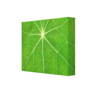 Green Theme  -  Fashion Art Canvas Print