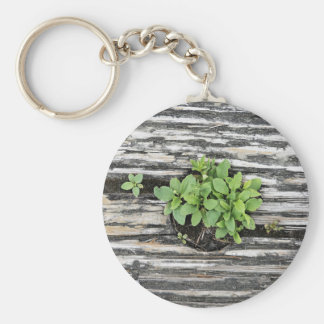 Green Themed, Green Plants Emerge And Isolated By Keychain