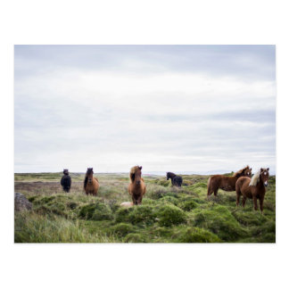 Green Themed, Herd Of Wild Horses In Tall Grass Of Postcard