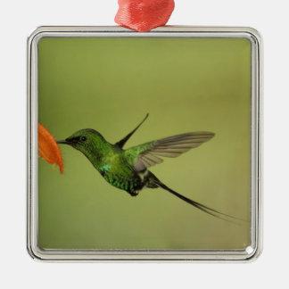 Green Thorntail Hummingbird, Cordillera Metal Ornament