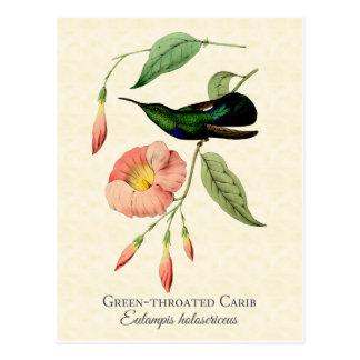 Green Throated Carib Hummingbird Art Postcard