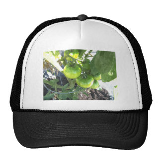 Green Tomatoes Mesh Hats