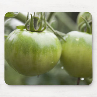 Green Tomatoes Mouse Pad