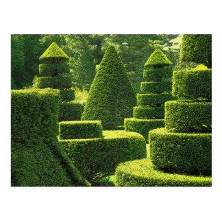 Green Topiary - Postcard