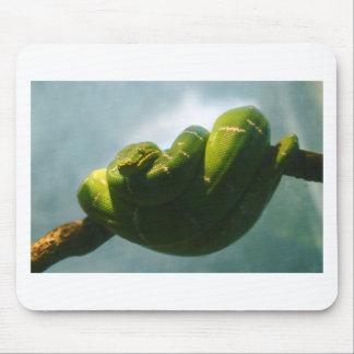 Green Tree Boa Mouse Pad