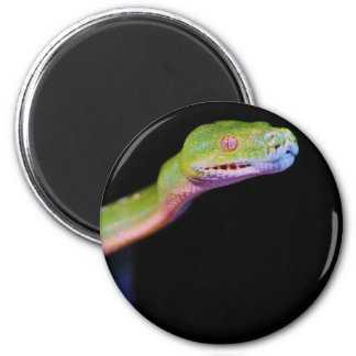 Green Tree Boa Stretching Magnets
