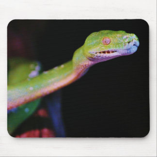 Green Tree Boa Stretching Mouse Pad