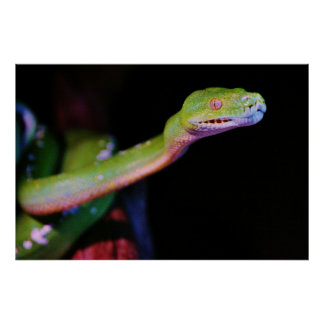 Green Tree Boa Stretching Poster