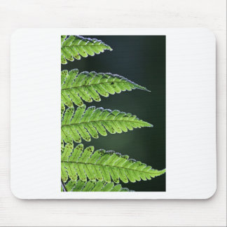 Green tree fern mouse pad