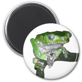 green tree frog 2 inch round magnet