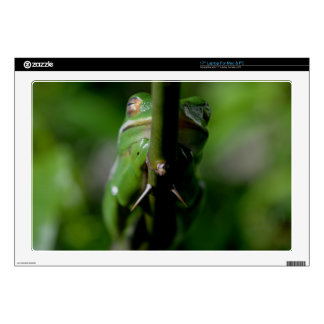 Green Tree Frog 5 Decal For Laptop