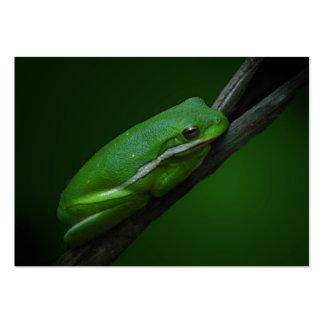 Green Tree Frog ATC Card
