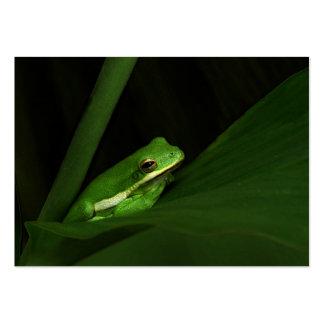 Green Tree Frog ATC Photo Card