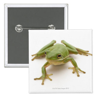 Green Tree Frog 2 Inch Square Button