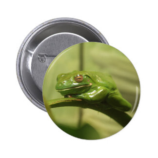 Green Tree Frog 2 Inch Round Button