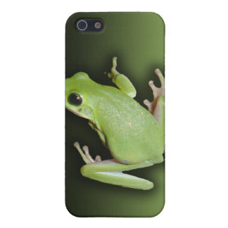 Green Tree Frog Case For iPhone SE/5/5s