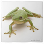 Green Tree Frog Ceramic Tiles