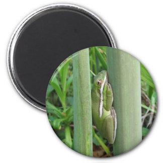 Green Tree Frog (Hyla cinera) 2 Inch Round Magnet