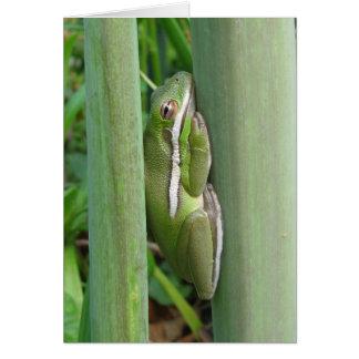 Green Tree Frog (Hyla cinera) Greeting Card