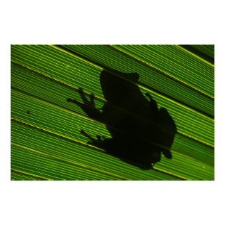 Green Tree Frog (Hyla cinerea) 1 Poster