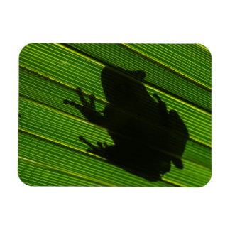 Green Tree Frog (Hyla cinerea) 1 Rectangular Photo Magnet