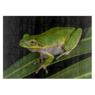 Green Tree Frog (Hyla cinerea) 2 Cutting Board