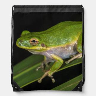 Green Tree Frog (Hyla cinerea) 2 Drawstring Bag