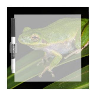 Green Tree Frog (Hyla cinerea) 2 Dry Erase Board