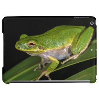 Green Tree Frog (Hyla cinerea) 2 iPad Air Covers