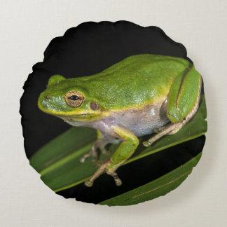 Green Tree Frog (Hyla cinerea) 2 Round Pillow
